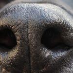 Ειδικά εκπαιδευμένοι σκύλοι, εντοπίζουν τους θετικούς στον COVID-19  επιβάτες, της Μαρίνας Λυμπεροπούλου